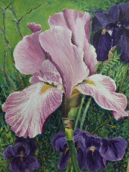 2014 iris rose