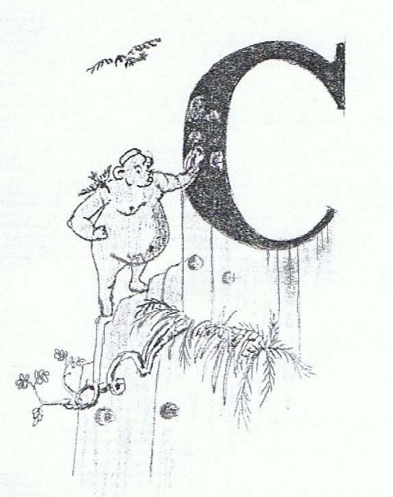 croc-8-001.jpg